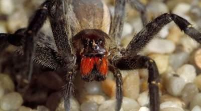 Смертельно опасные пауки, с которыми шутки плохи. Фото