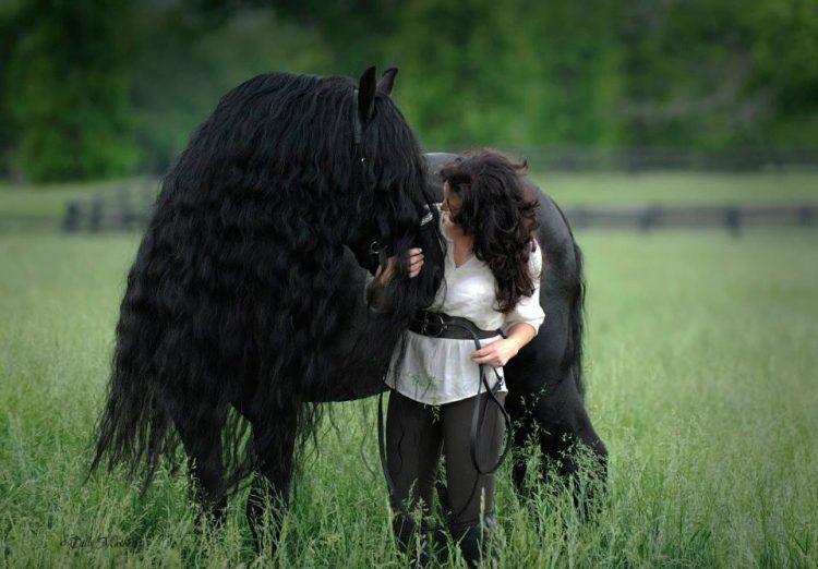 Фридрих Великий - самый красивый конь в мире