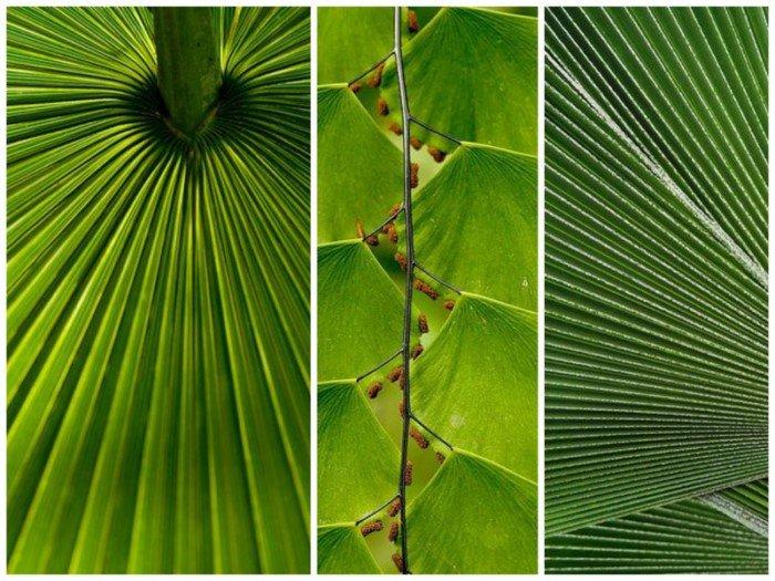 Картинки по запросу прямые линии в природе