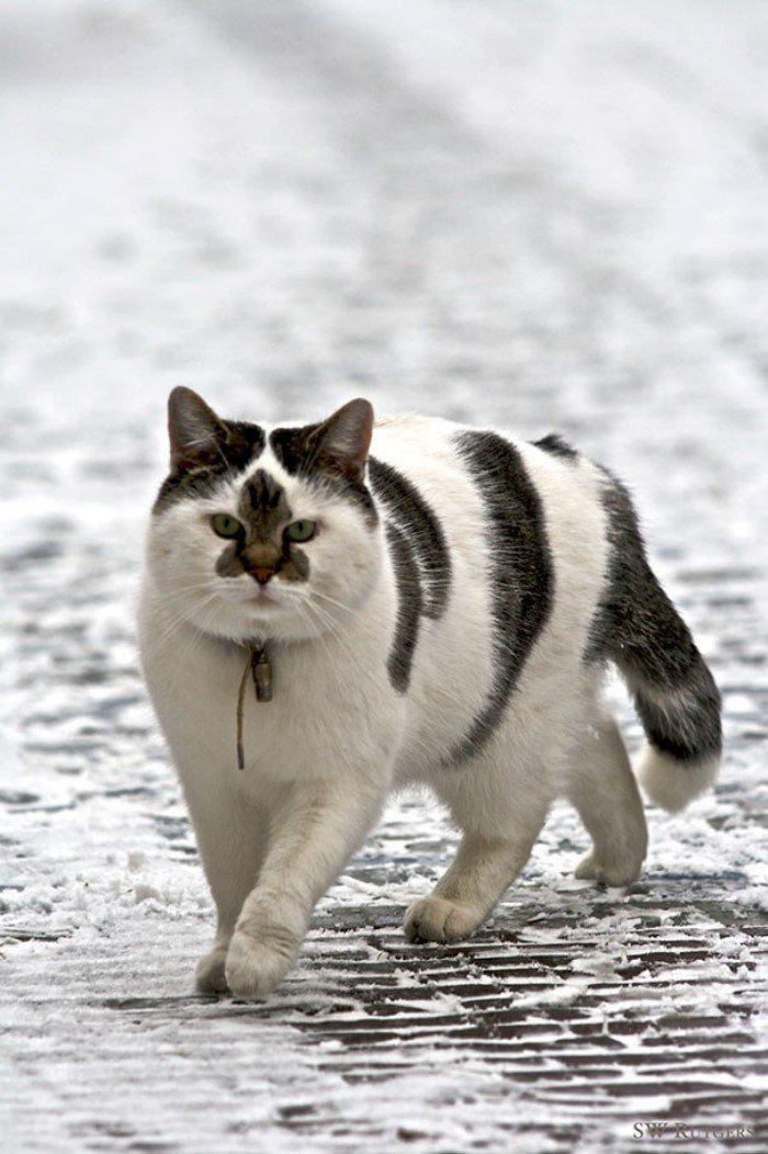 раз пропадают картинки необычного кота мехах