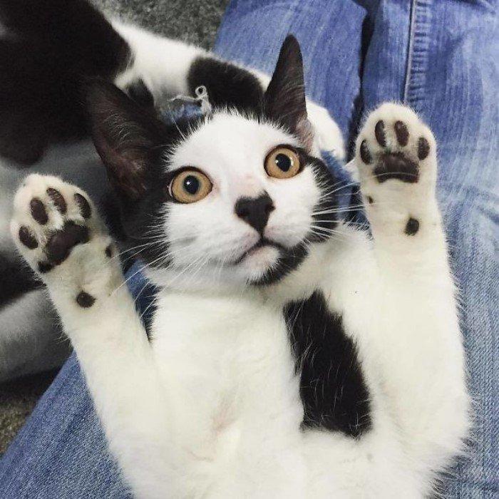 Необычные коты мира фото и описание