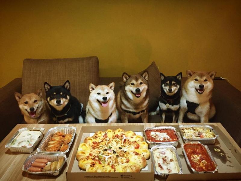 Прикольные картинки животные еда, днем