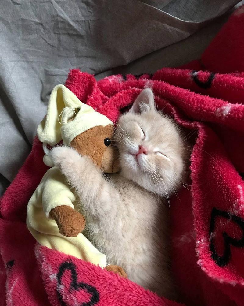Добрых снов картинки прикольные милому