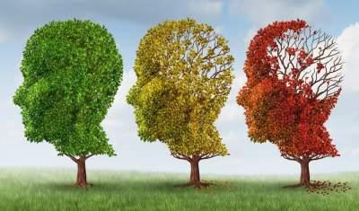 Строение мозга увсех финансово удачных  людей похоже— Ученые