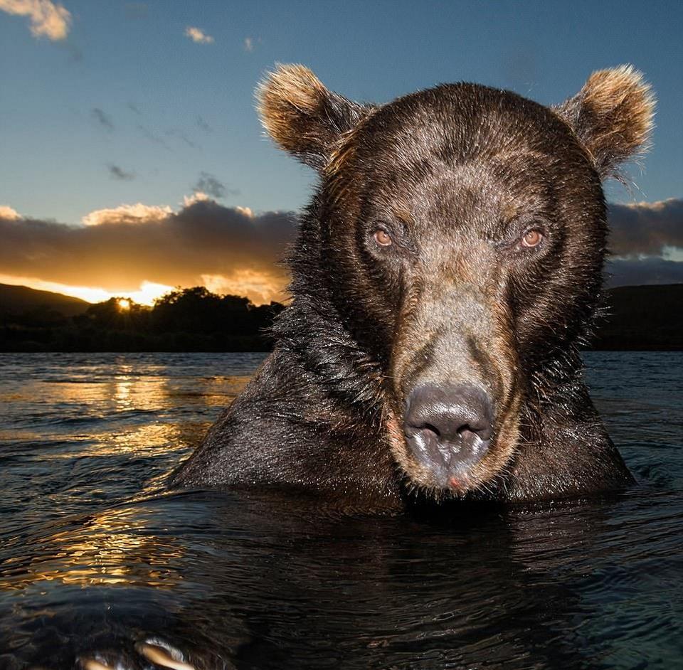 Последние фотоснимки медведь