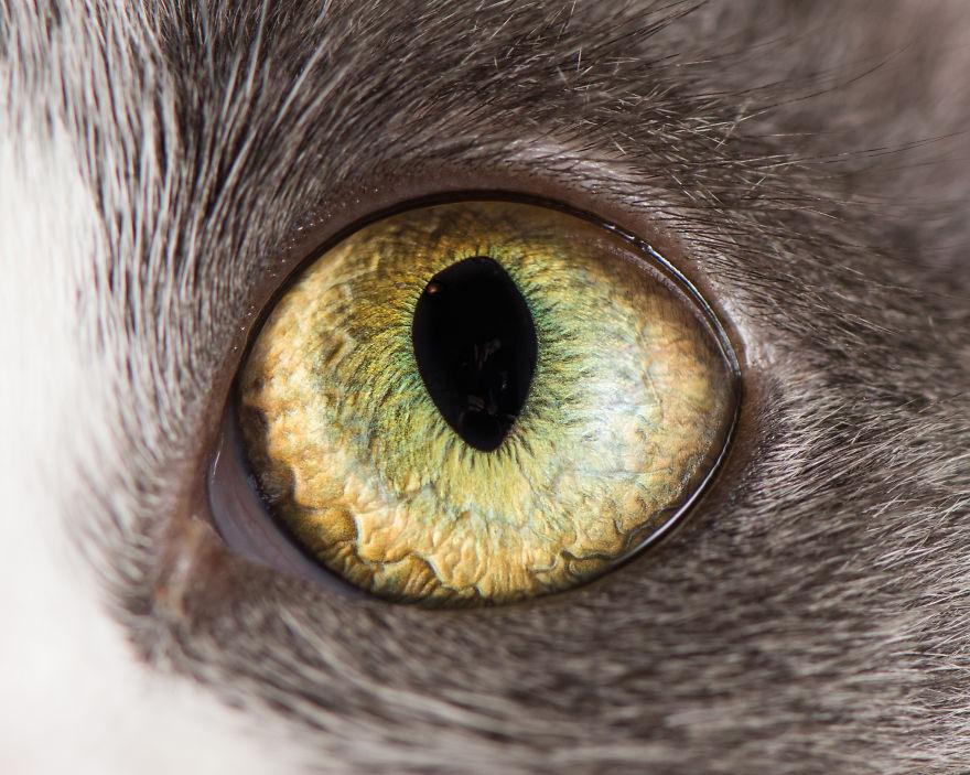 Картинки зеленых кошачьих глаз