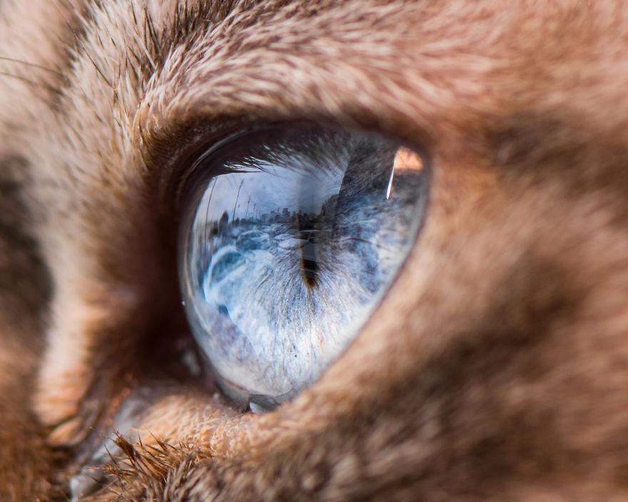 картинка глаз человека и кота украинские