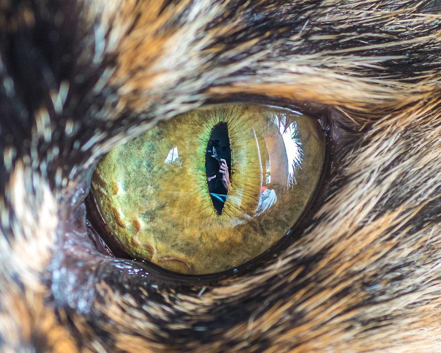 всего фото глаз животных там