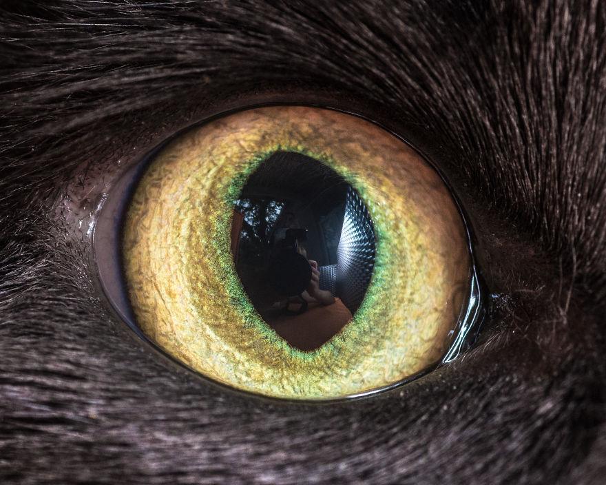 Живая картинка глаз кошки
