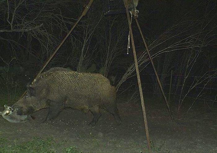 она, странные фото с камер ловушек в лесу ведь это совсем