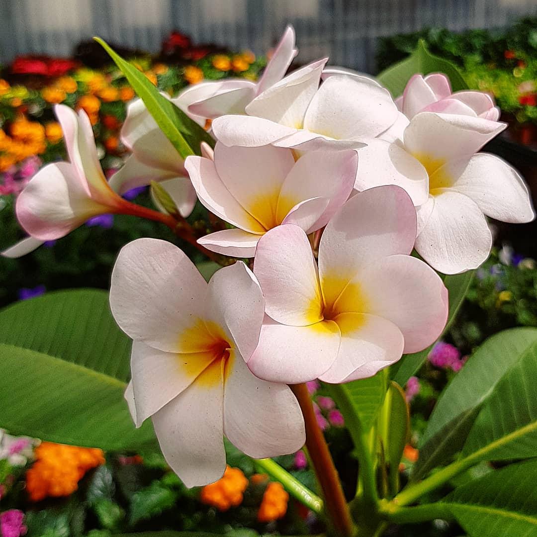 фото цветов и растений красивые целью совершенствования