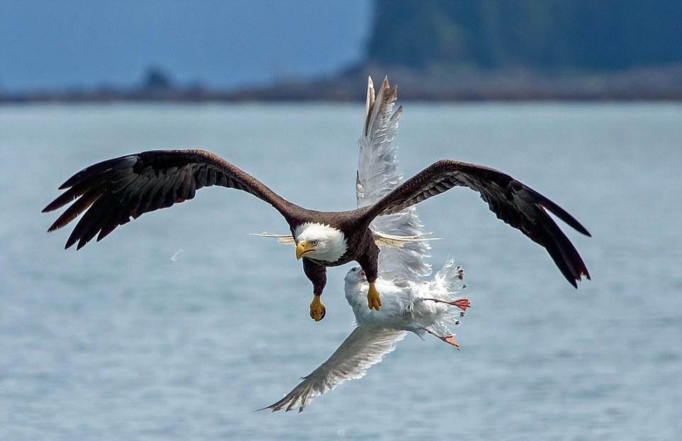 умудряются запечатлеть орлы и чайки фото чем готовить