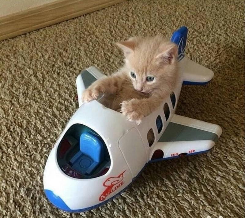 Акварельные, хорошего полета смешные картинки