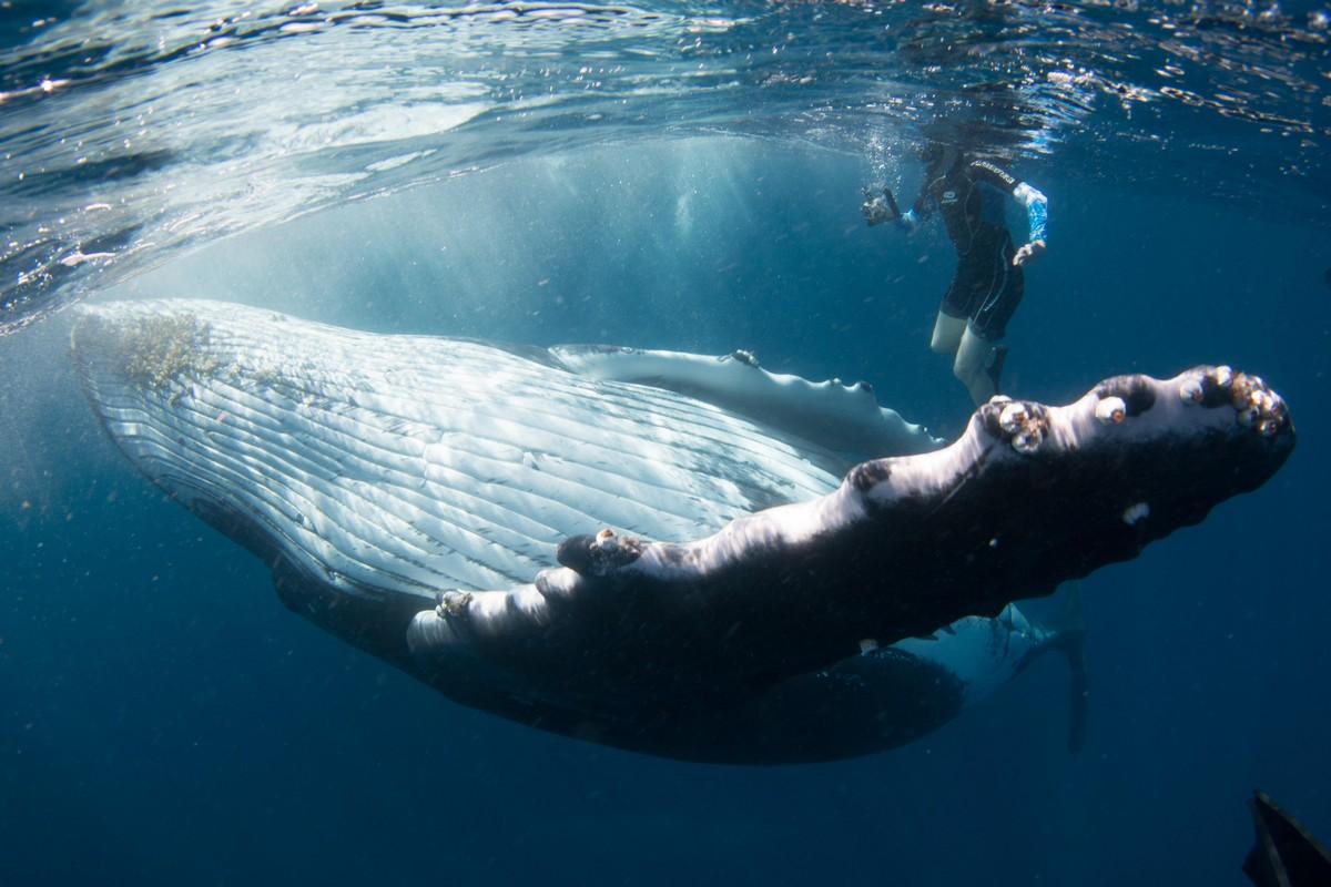 интересное фото с китами сорта