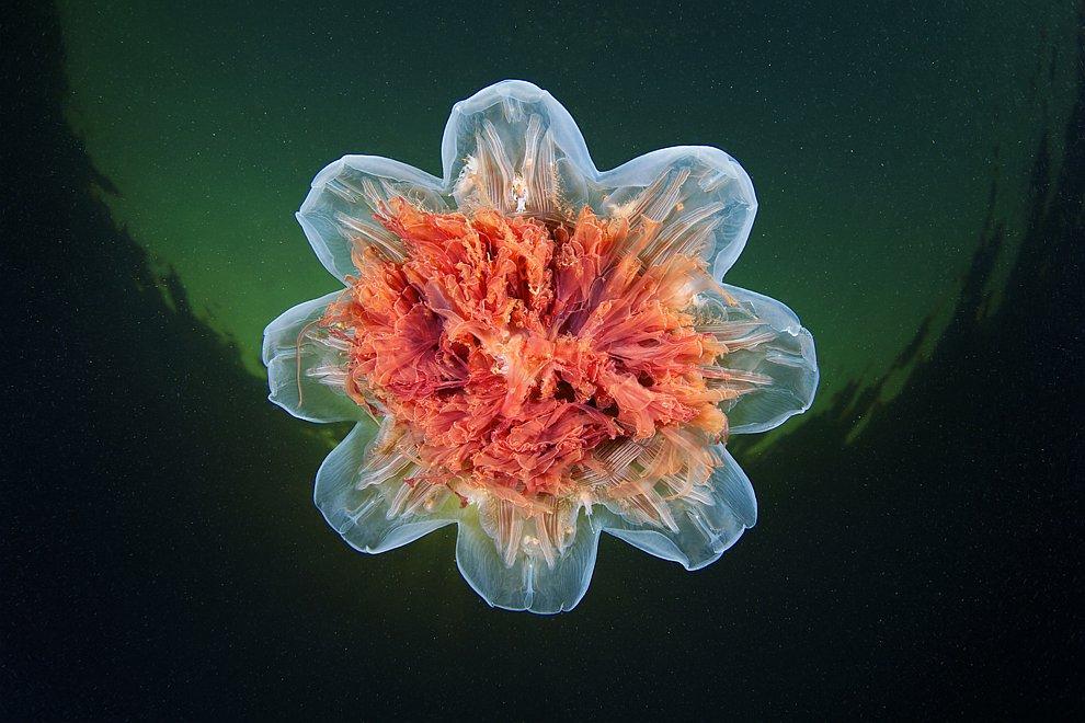 нашла для странные медузы фото для