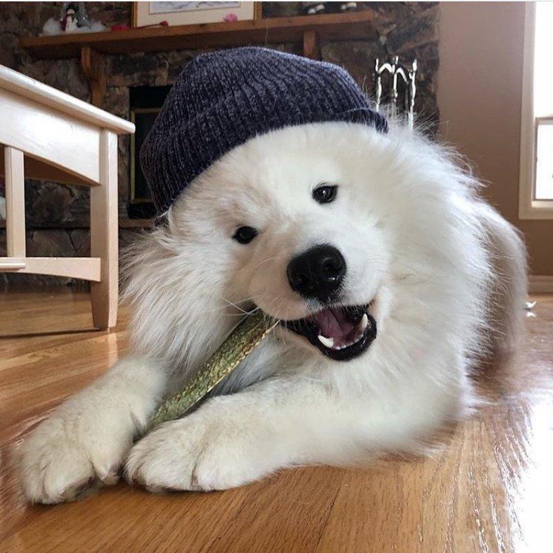 Картинки самых красивых собак на свете