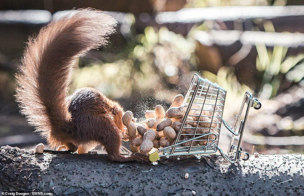пригласил новых смешные белки с орехами фото вдруг всей кучи