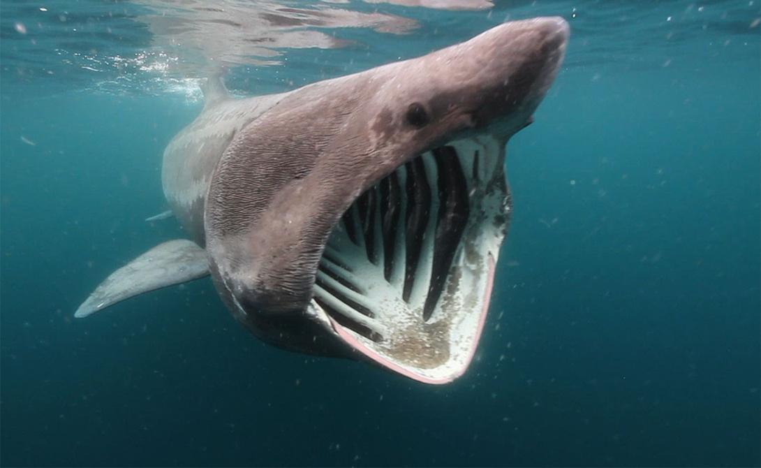 Фотографии прикольные, картинки гигантской акулы