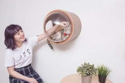 """Дизайнеры придумали идеальный домик для """"котов-космонавтов"""""""