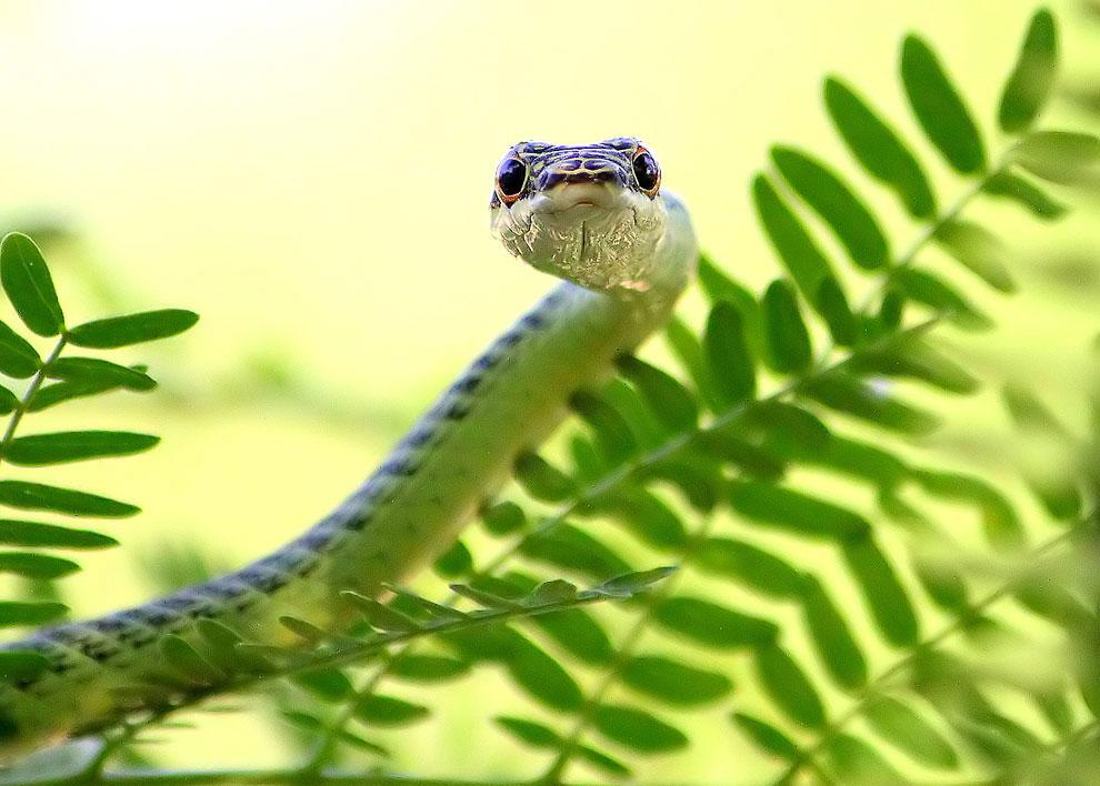 Летающие змеи картинки
