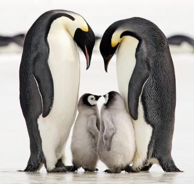 Потешные фотографии животных, умеющих дарить нежность