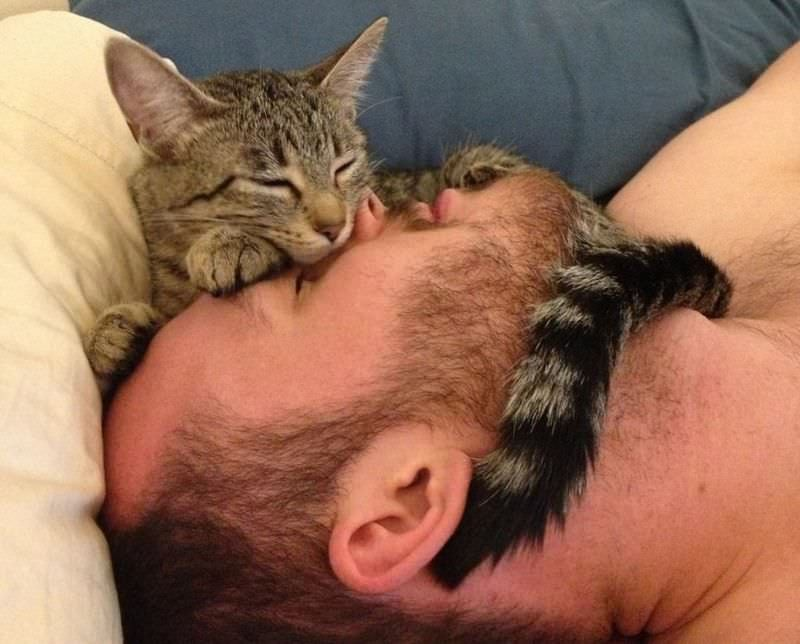 Кошки и люди картинки приколы
