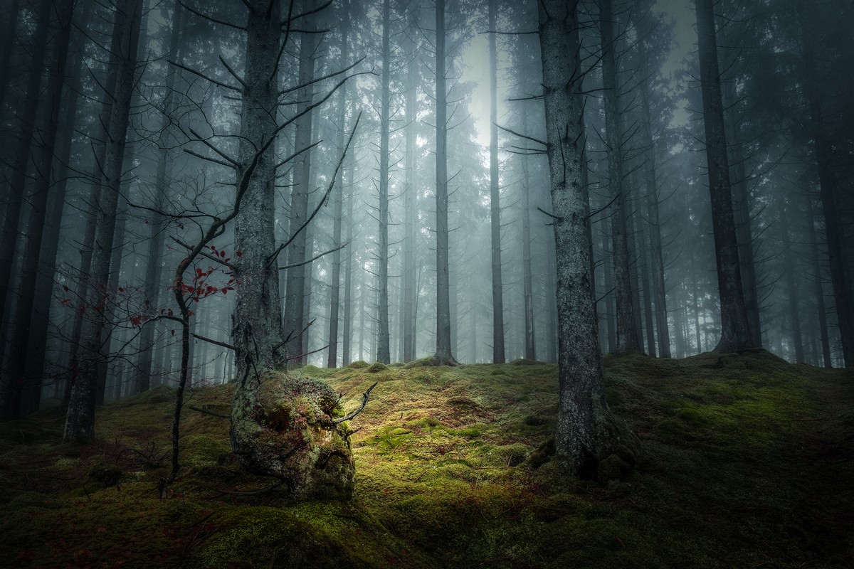 съемка картинки таинственного леса сам