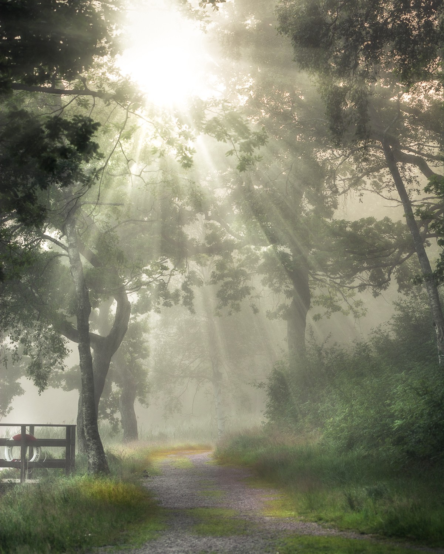 красивые фото пейзаж сад в тумане очень