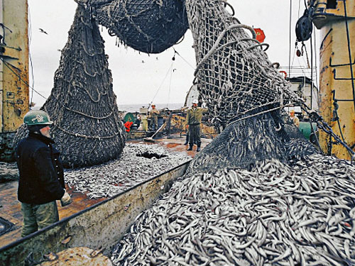 a look at the development of commercial fishing industry