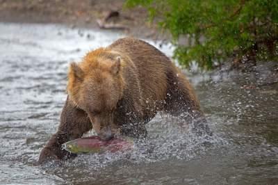 Жизнь медведей в дикой природе. Фото
