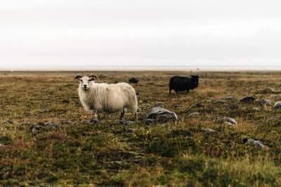 Фотограф показал, ради чего приезжают в Исландию. Фото