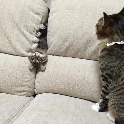 Забавные котики, попавшие в нелепую ситуацию