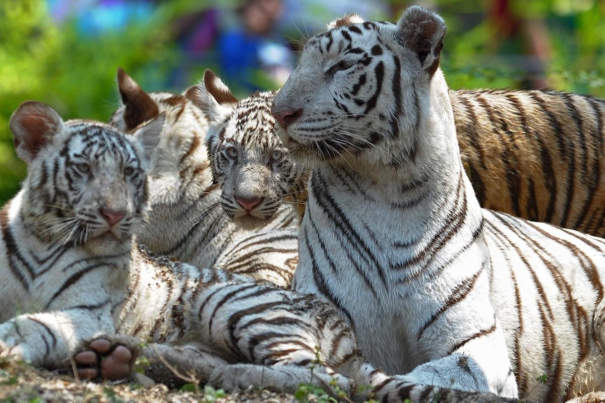 Животные индии картинка