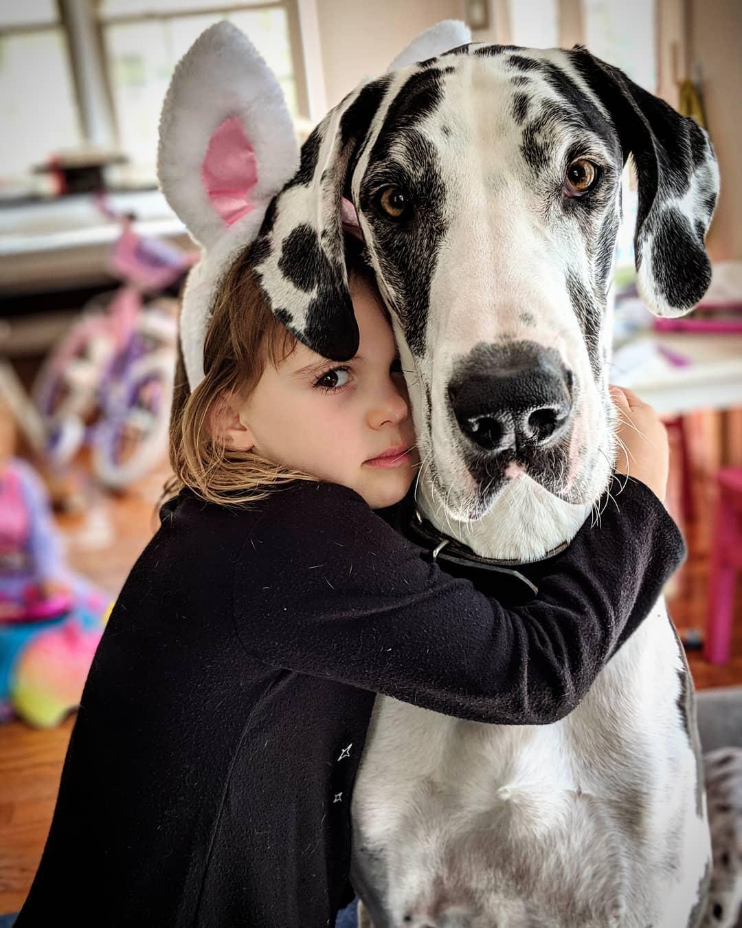 Дети и собаки картинки для детей