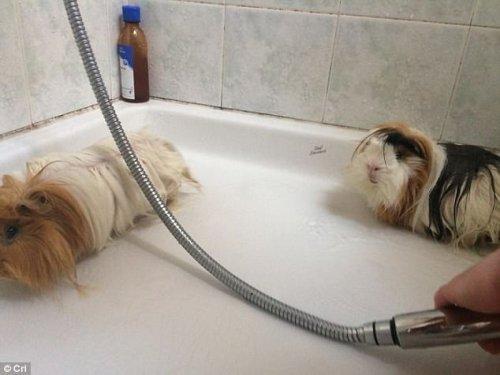 Домашние животные, которые не любят водные процедуры (ФОТО)