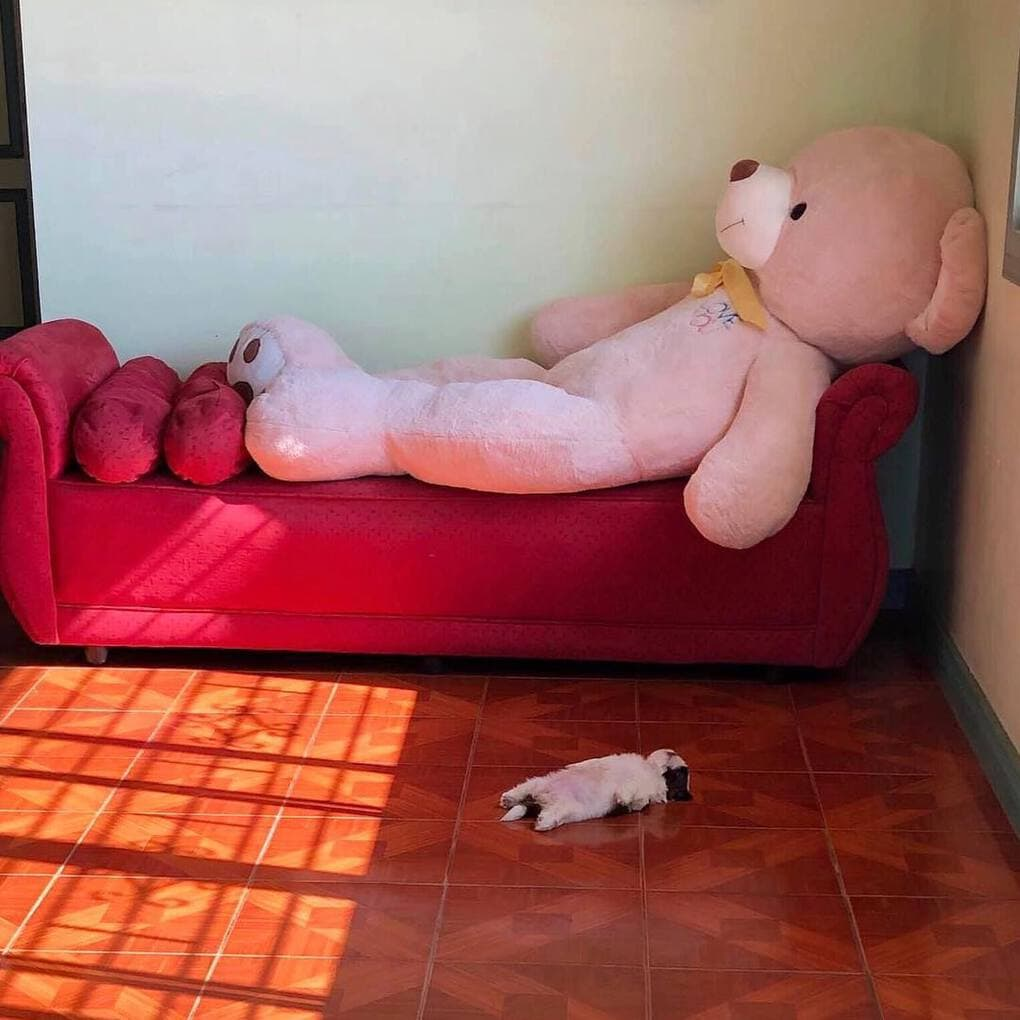 Сеть покорил забавный спящий щенок. ФОТО