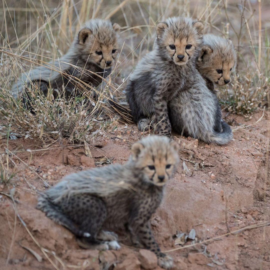 Фотографии африканских животных от Руди Хульшофа