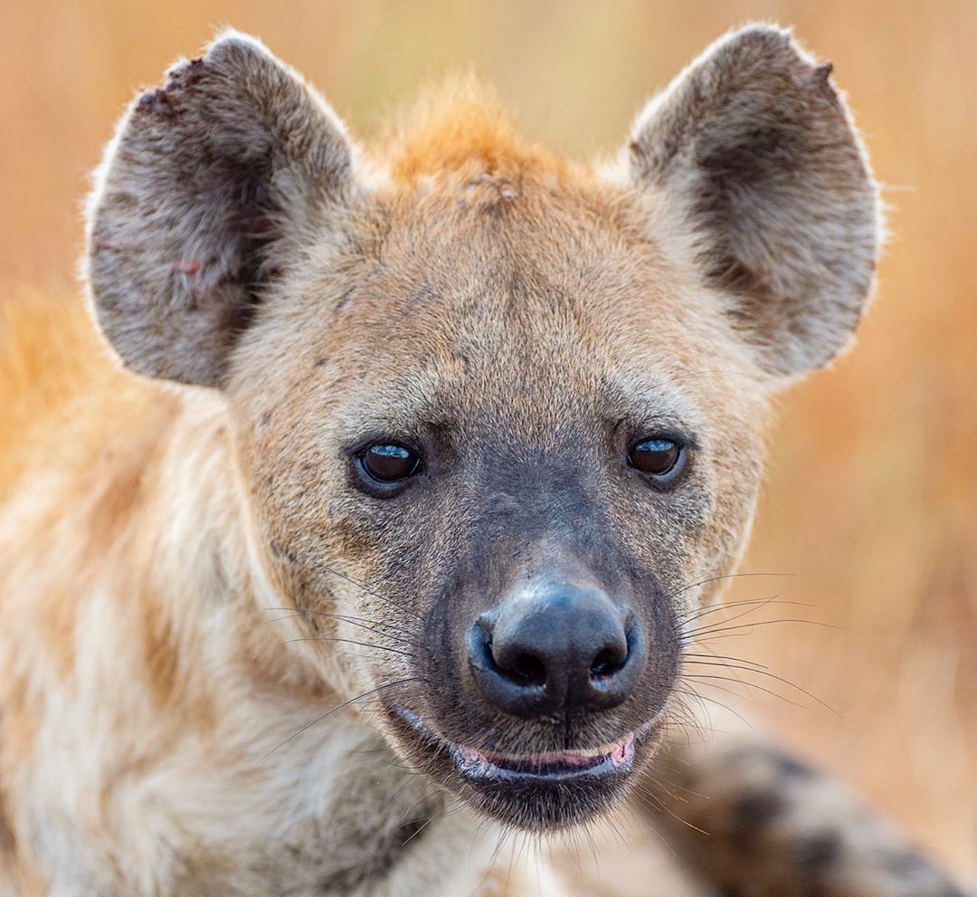 Картинки животное африканское