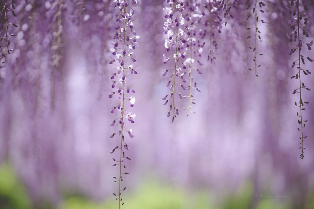 Красота цветов на снимках Мияко Кумуры