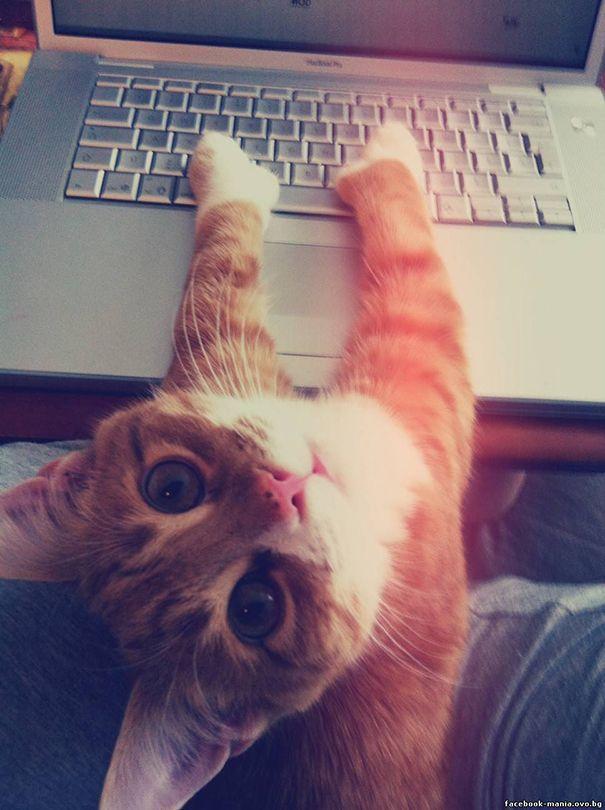 20 кошек, которые плевали на ваше личное пространство (ФОТО)