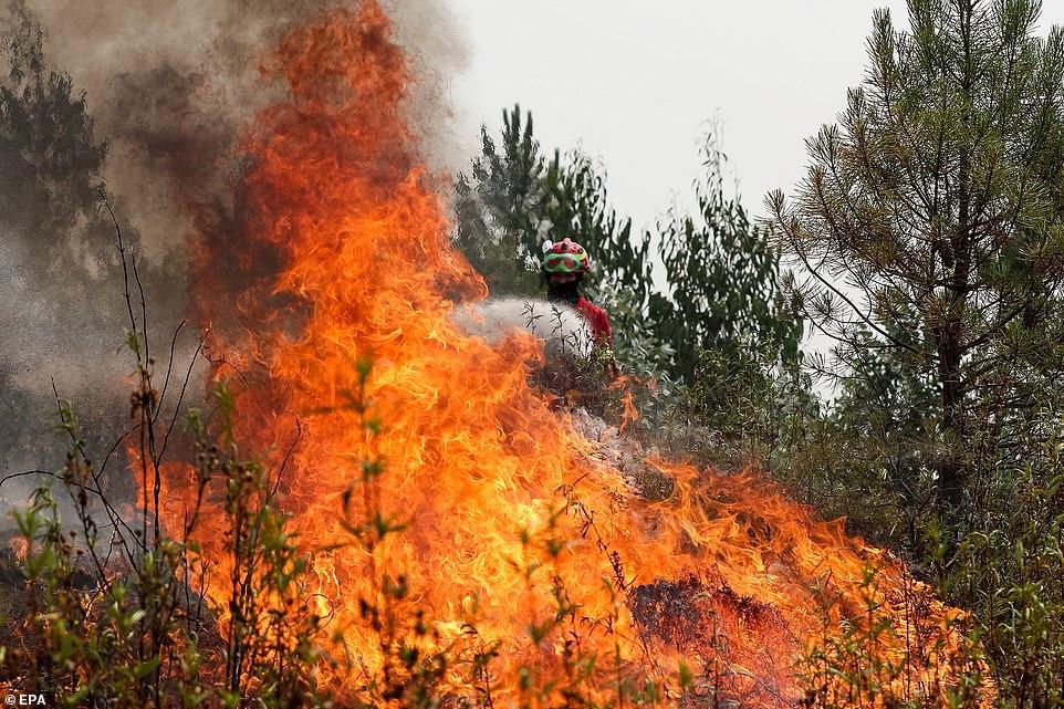 святого валентина португалия пожары фото зал