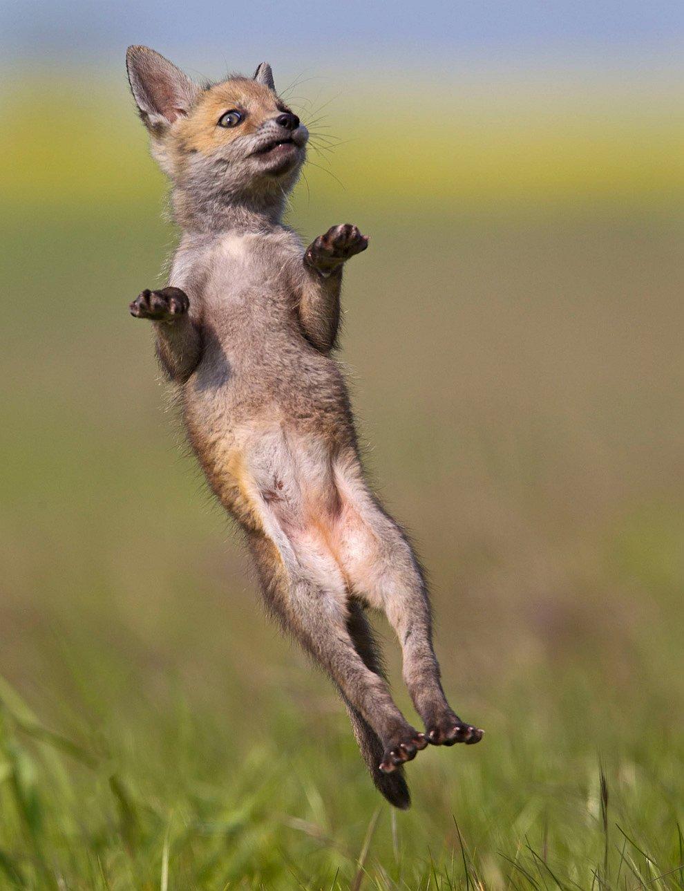 Смешные картинки танцующие животные