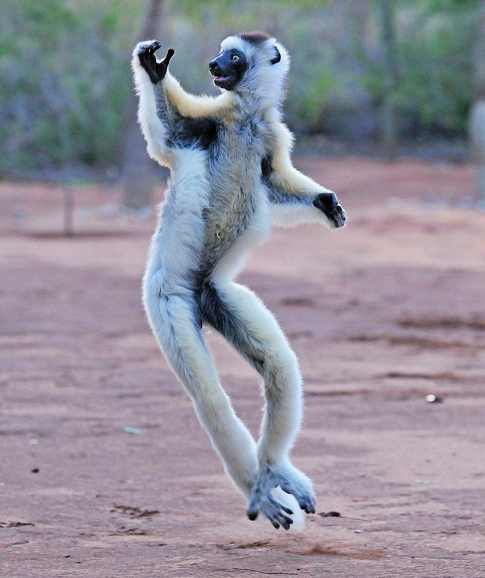 создать стильный демотиватор я редко танцую короткие