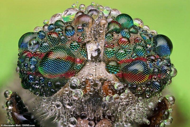 Фотограф показал насекомых на ярких макроснимках. Фото