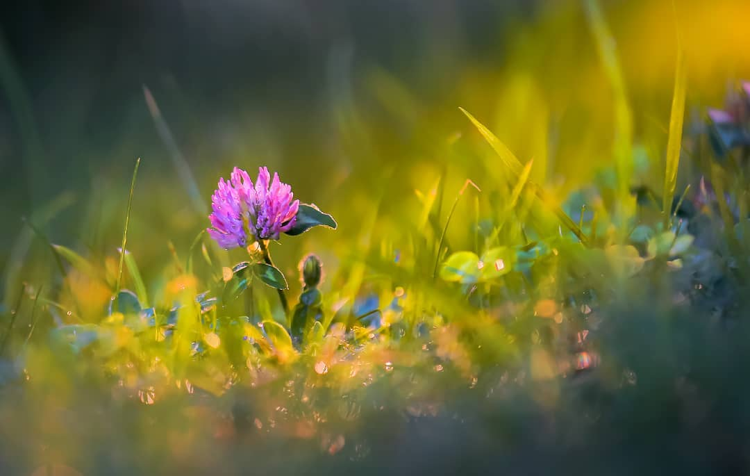 Красивые фотографии цветов от Владимира Князева