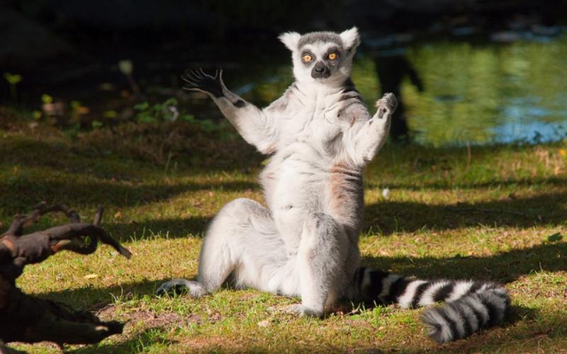 Доброе картинки, смешные картинки упоротых лемуров
