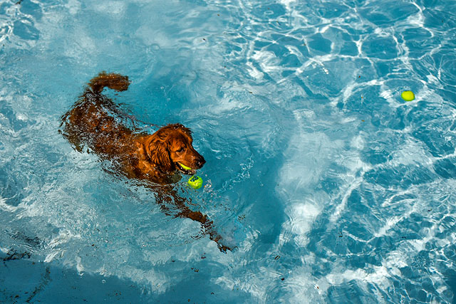 «Собачий день» в аквапарке Колорадо. ФОТО