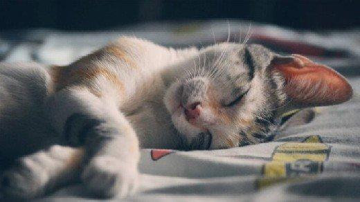 Медики подсказали, как облегчить раннее пробуждение