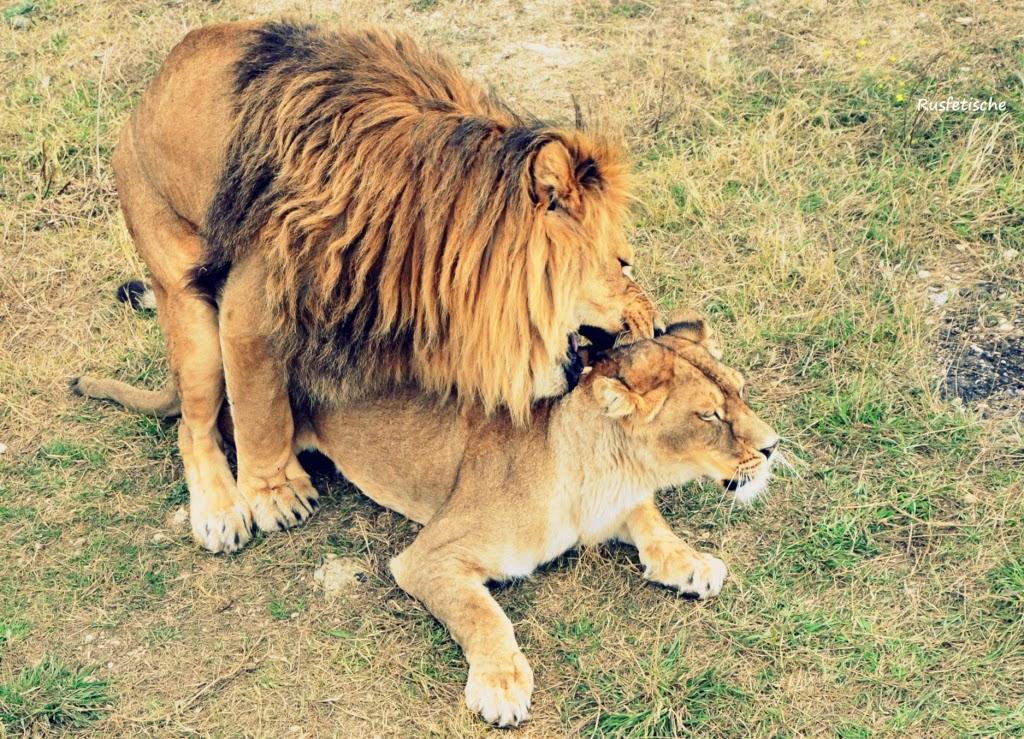 Сайт секс льв в