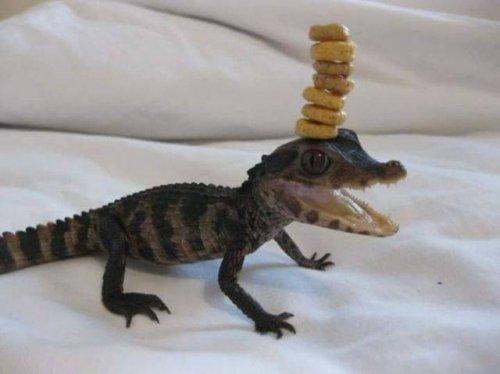 Забавные снимки животных, которые поднимут вам настроение (ФОТО)